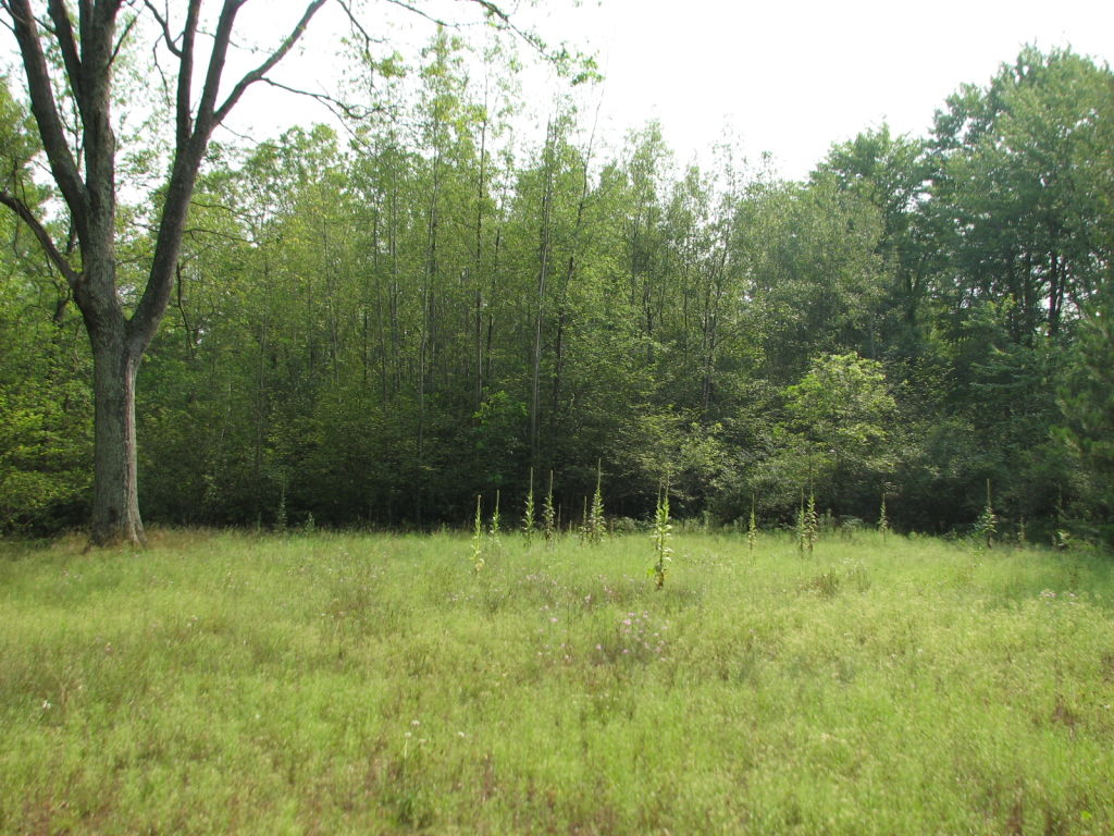 Photo # of Parcel C1, in Surrey Township, Clare County, near Farwell, Michigan